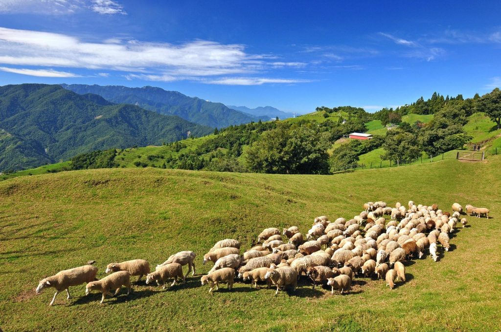 ITF旅展退輔會農林FARM遊趣 三高山農場住宿優惠多
